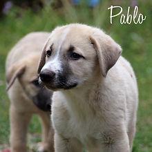 PC Pablo.jpg