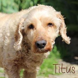 pc-titus-02.jpg