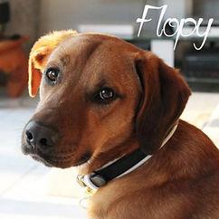 pc-flopy.jpg
