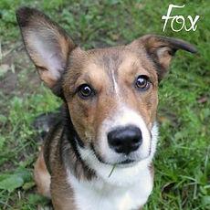pc-fox-1.jpg