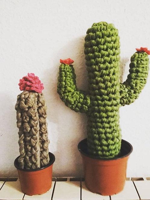Grand Cactus avec son pot