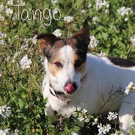 pc-tango.jpg