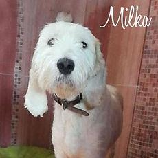 pc-milka-1.jpg