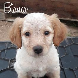 PC Bianca.jpg