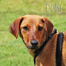 pc-dolly.jpg