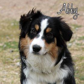 PC Abby.jpg