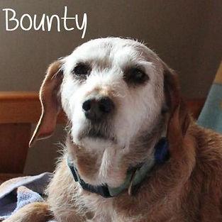 pc-bounty-1.jpg