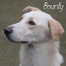 pc-bounty.jpg