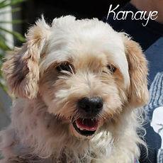 pc-kanaye1.jpg