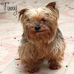 PC Timy.jpg