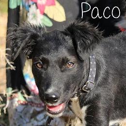 pc-paco-1.jpg