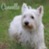 pc-cannelle-02.jpg