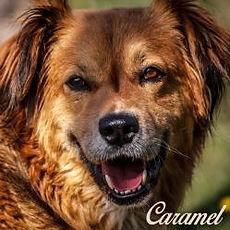 caramel-portrait-1.jpg