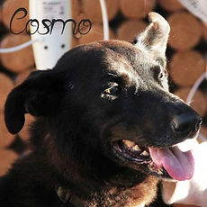 pc-cosmo-2.jpg