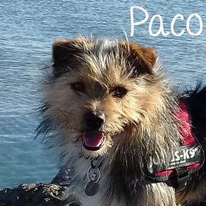 pc-paco.jpg
