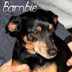 bambie-site.jpg