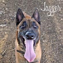 PC Jagger.jpg