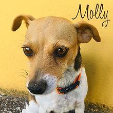PC Molly.jpg
