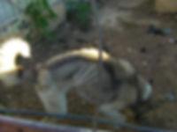 oslo-m10.jpg