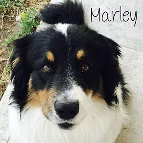 pc-marley-1.jpg