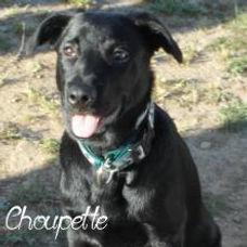 choupette-1.jpg