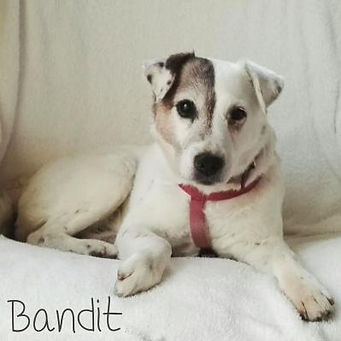 pc-bandit.jpg