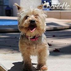pc-charlotte-c-1.jpg