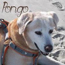 pongo-site.jpg
