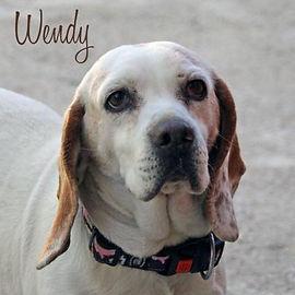 pc-wendy-1.jpg