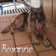 roxanne-1.jpg
