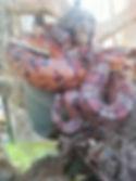 Oatland Welcome Center Reptiles