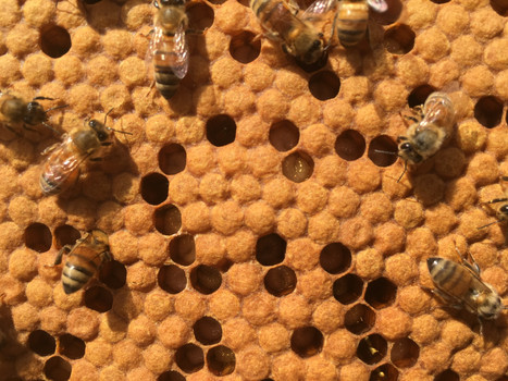 Honey bees, Things to do in Savannah GA with kids