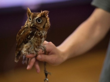 Get even closer with Animal Encounters