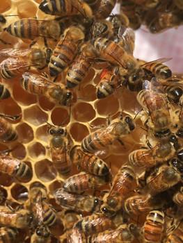Coastal Empire Beekeepers Association