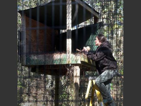 At Oatland, eagles get a fertility check
