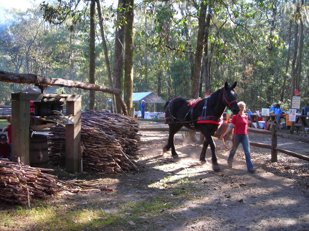 Annual Events at Oatland Island Harvest Festival