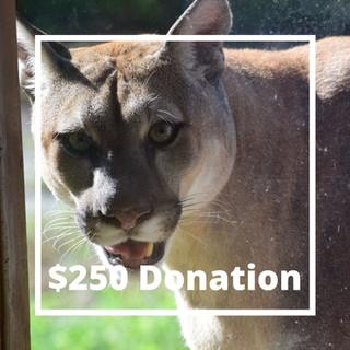 Donations (2).jpg