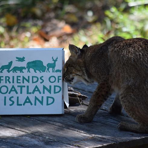 Enrichment Saturday - Bobcat