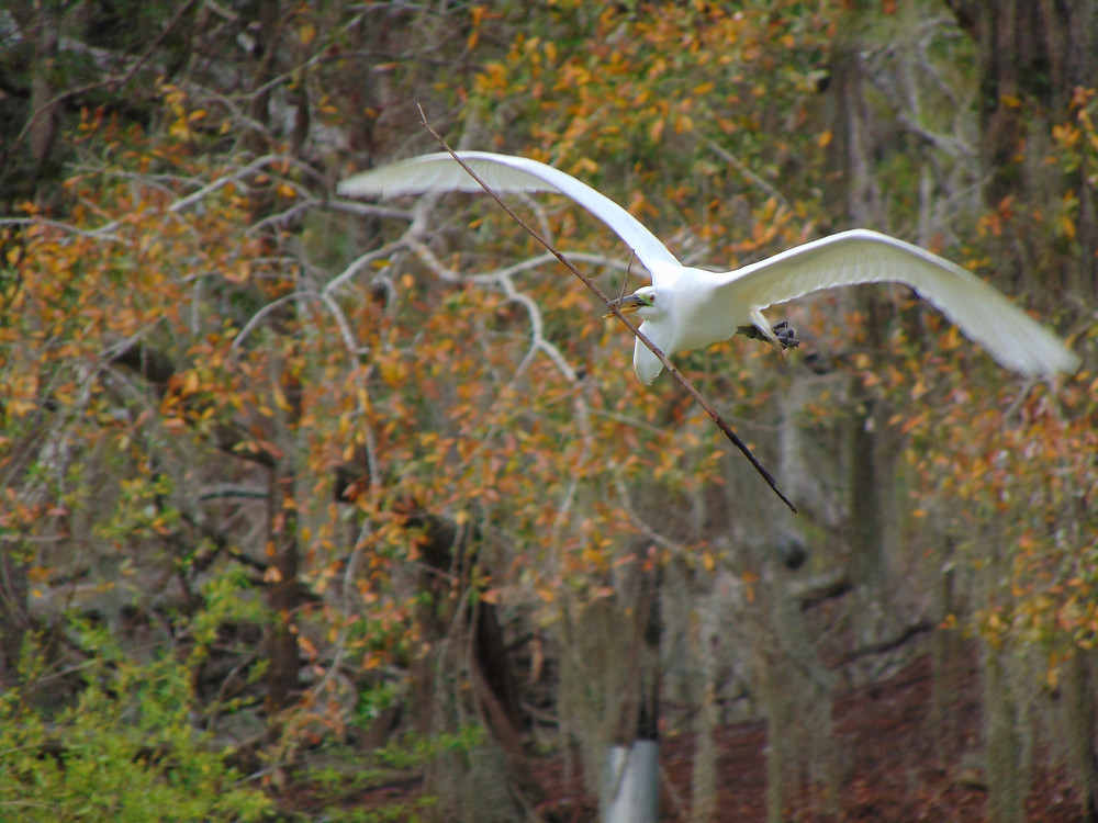 Georgia DNR Grant Awards Wildlife Viewers to Oatland Island Wildlife Center for Birdwatching