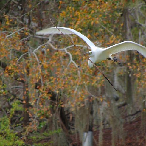 Early Birding Walk