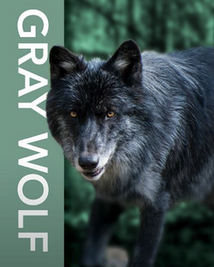 Gray Wolf Corporate Sponsorship Friends of Oatland Island