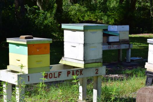 Oatland Island honey bee hives CEBA Bee Yard