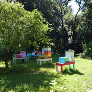 Oatland Island Bee Hives