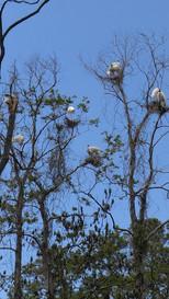 Ledbetter Pond, Oatland Island Wildlife Center, nesting birds