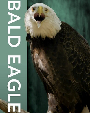 Bald Eagle Corporate Sponsorship Friends of Oatland Island