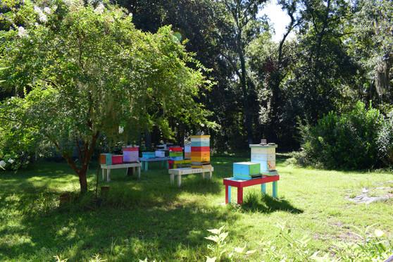 Oatland CEBA Bee Yard