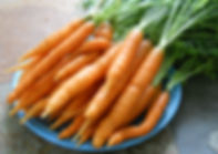 fresh organic Carrots from Bottle Hollow Farm