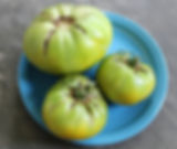 Spear's TN Green tomato from Bottle Hollow Farm