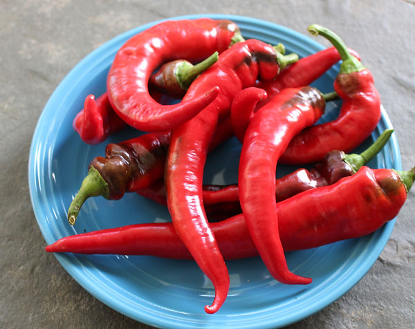 Jimmy Nardello peppers from Bottle Hollow Farm, Shelbyville, Tennessee