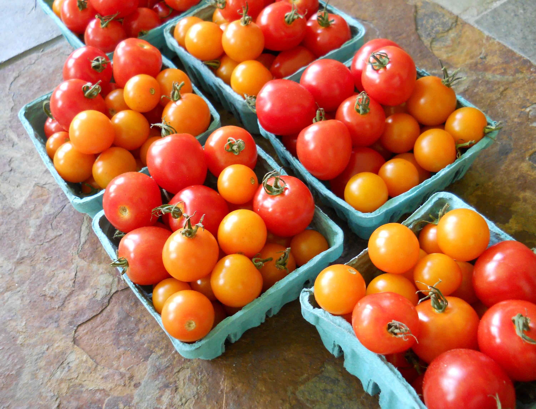 Tomato Snack Pack 2